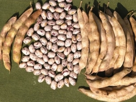 Borlotti bonen /  Borlotti Lamon di Cuneo/ Borlotti extra dik / Italië ( Lamon) / Teelt: traditioneel / Oogstjaar 2019 / 0,4 kilo