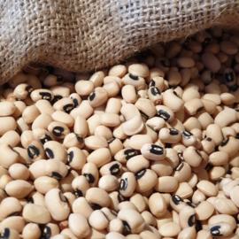 Black Eye Beans (peas) /  U.S.A. / Cow beans / Oogstjaar 2020 / 0,5 kilo