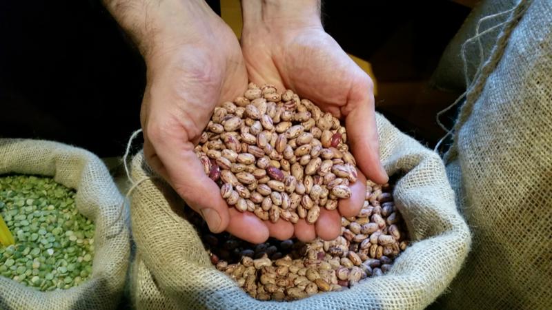 Kievitsbonen / Noord-Holland / Teelt: traditioneel / Oogstjaar 2019 / 0,5 kilo