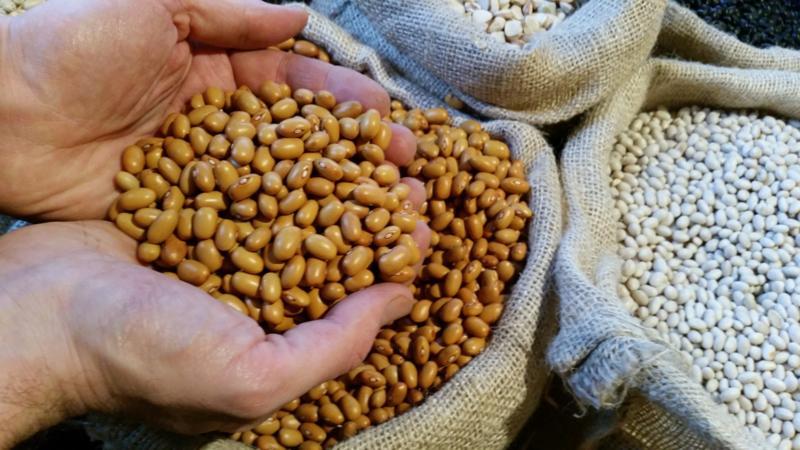 Bruine bonen / Zeeland (NL)/ Teelt: traditioneel / Oogst 2018  / 0,5 kilo