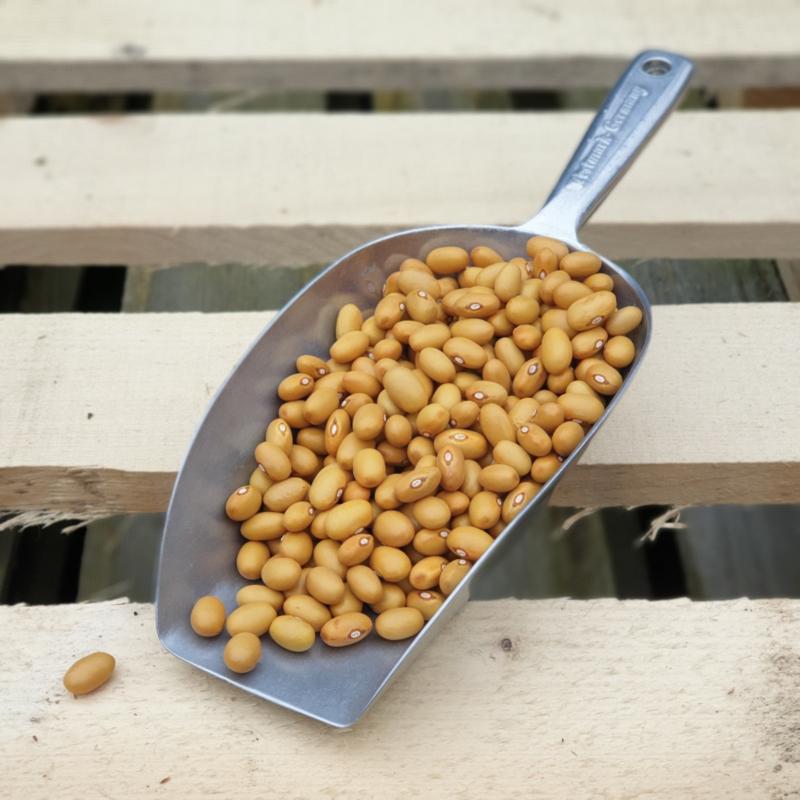 Bruine bonen / Zeeland (NL)/ Oogst 2021  / 0,5 kilo