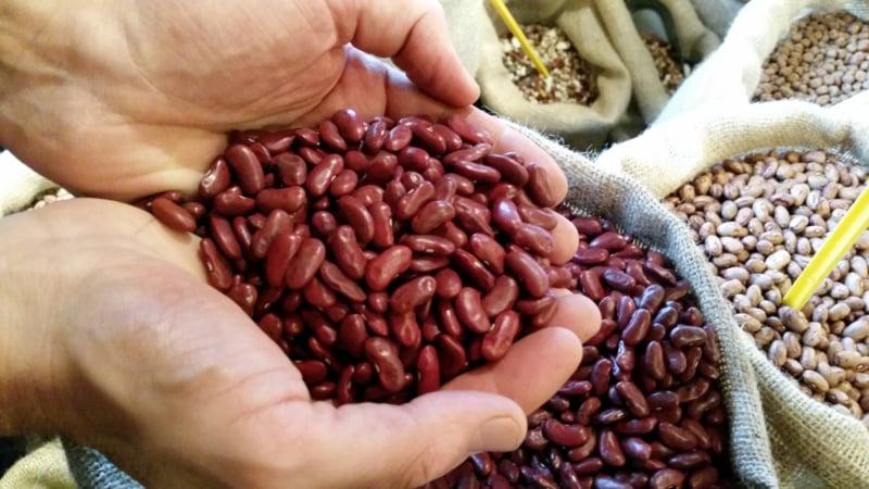 Kidneybeans red / Canada / Rode nierbonen / Teelt: traditioneel /  Oogstjaar 2020 / 0,5 kilo