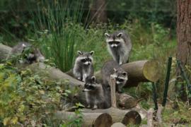 030. Wildpark Gangelt.