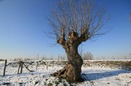 025. De winter.