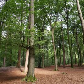 Rondje bos augustus