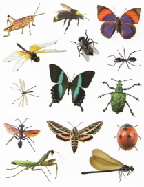 Diverse Insecten  - 14 Stickers