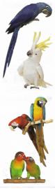 Prachtige Papegaaien - 4 Stickers