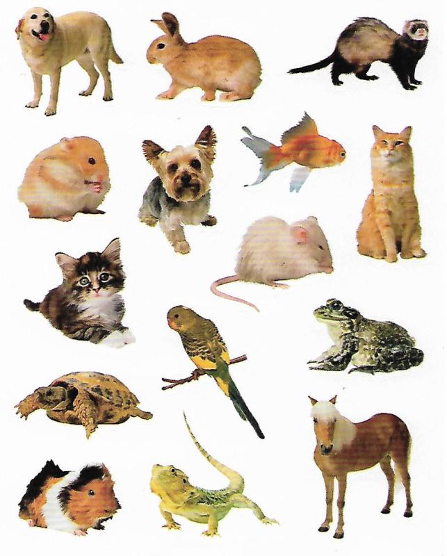Huisdieren - 15 Stickers