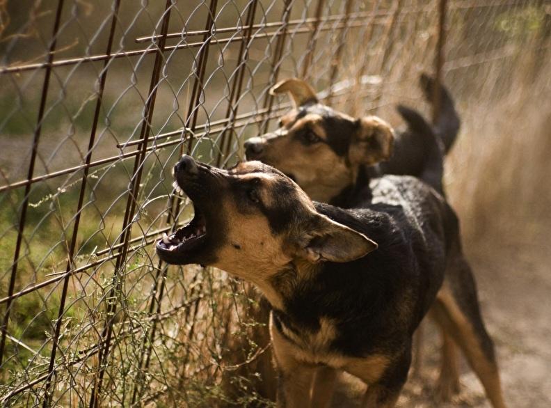 overlast-hond-honden-buren