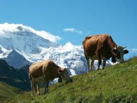 8 dagen Zwitserse Alpen met bus en trein  ( Effeweg )