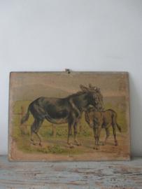 Antieke schoolplaat met de ezel