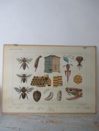 Oude schoolplaat insekten / bijen SOLD
