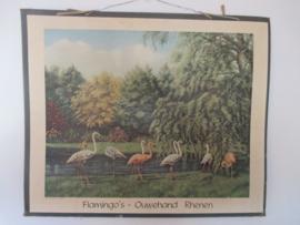 Oude schoolplaat met flamingo`s