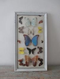 Oude vlindervitrine SOLD