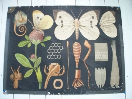 Antieke schoolplaat met de vlinder SOLD
