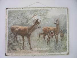Oude schoolplaat met Bambi SOLD