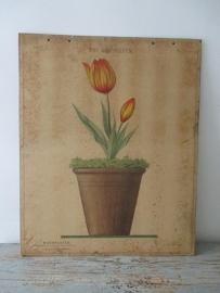 Oude schoolplaat met tulp SOLD