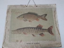 Oude schoolplaat met vissen SOLD
