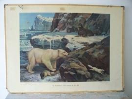 Oude schoolplaat met ijsbeer SOLD