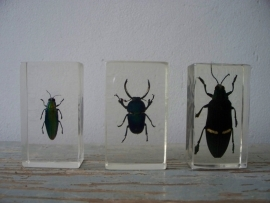 kevertjes / insecten SOLD