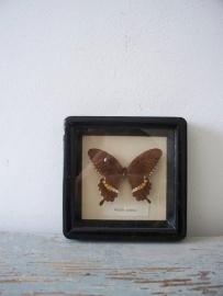 Oude vlinder SOLD