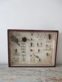 Oude insektenvitrine SOLD