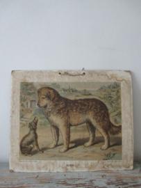 Antieke schoolplaat met de hond