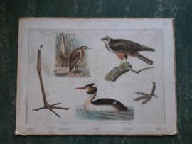Oude schoolplaat met vogels