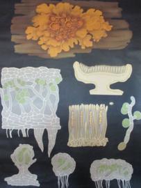 Antieke schoolplaat met korstmos / mos