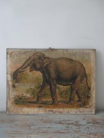 Antieke schoolplaat met de olifant SOLD