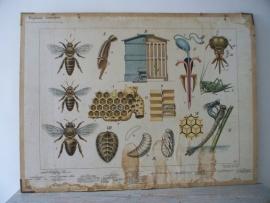 Oude schoolplaat insekten SOLD