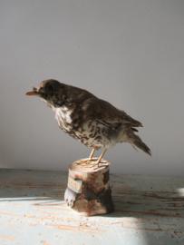 Antiek vogeltje SOLD
