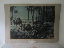 Oude schoolplaat in de woestijn / kamelen