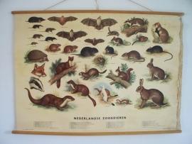 Oude schoolplaat met Nederlandse zoogdieren SOLD
