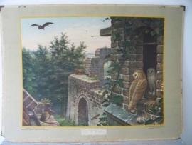 Oude schoolplaat met uilen SOLD