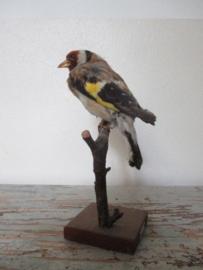 Vogeltje SOLD