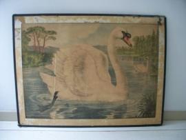 Oude schoolplaat met zwaan SOLD
