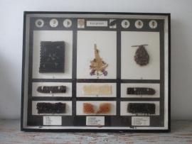 Oude insekten vitrine De Honingbij SOLD