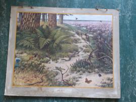 Oude Koekkoek schoolplaat op de heide