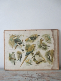 Oude schoolplaat met vogels SOLD