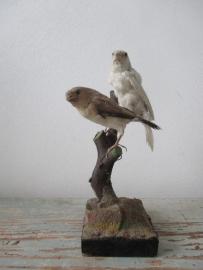 Oud vogeltjes SOLD