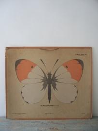Oude schoolplaat met vlinder SOLD