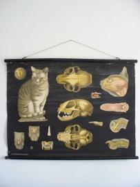 Oude schoolplaat met kat / poes SOLD