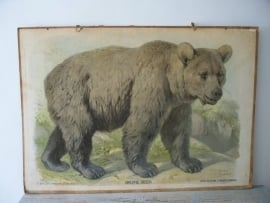 Oude schoolplaat met bruine beer SOLD
