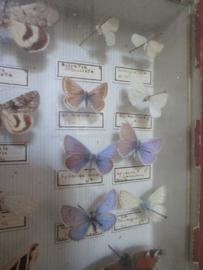 Vlinders SOLD