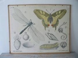 Oude schoolplaat met een vlinder en een libelle SOLD