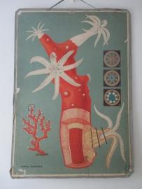 Oude schoolplaat met koraal SOLD