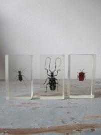 kevertjes / insecten