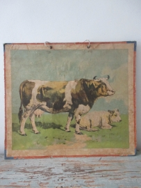Oude schoolplaat met de koe SOLD