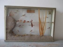 Oude insekten vitrine SOLD